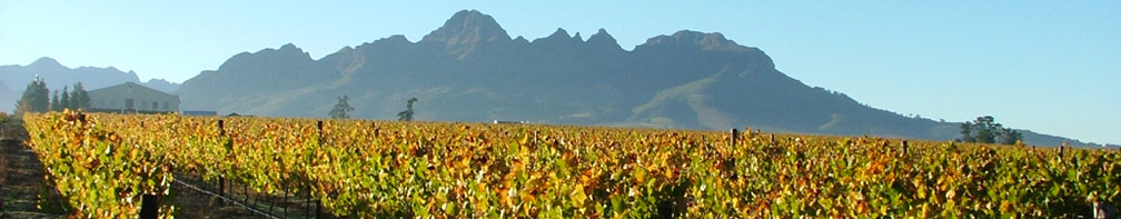 wheelchair friendly Cape Winelands tour - rollingsa.co.za